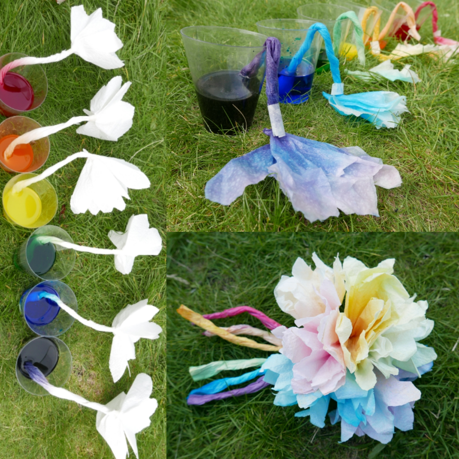 Colourful Capillary Action Experiment Childsplayabc Nature Is Our Playground